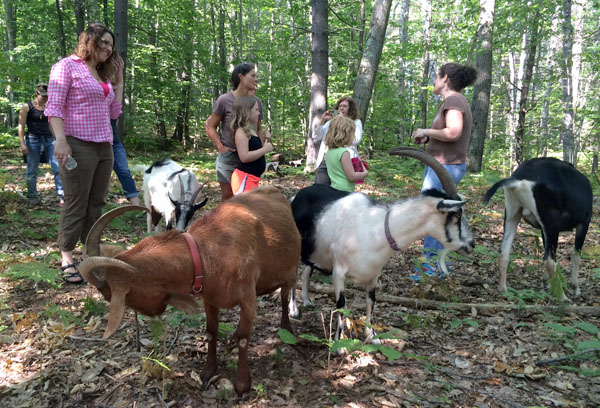 goat hike at Ten Apple Farm