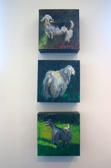Carolyn Miller's beautiful paintings of Italian goats