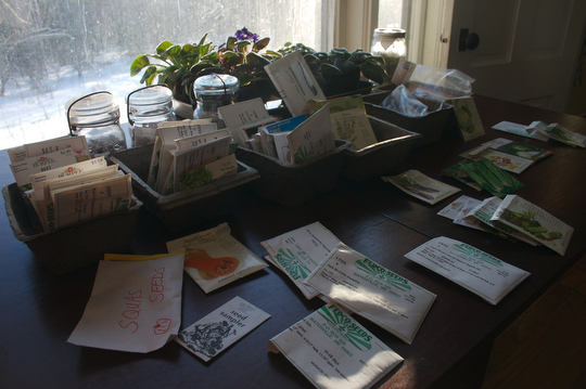 Organizing last year's leftover seeds