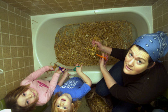 Charlotte, Bea and Margaret fill our bathtub with the cut straw for our oyster mushrooms to grow on.