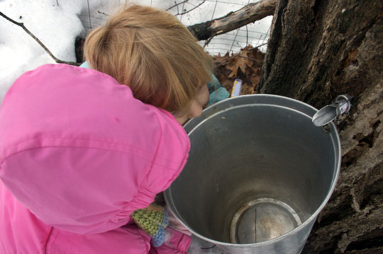 Charlotte and Bea watch the maple sap drip