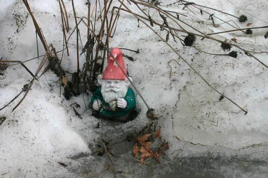 Mr. Pickles, garden gnome and spring barometer