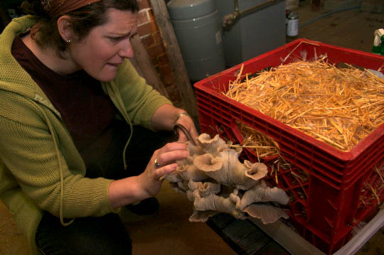 Margaret harvests the mushrooms