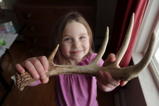 Charlotte shows off the antler we found under an apple tree