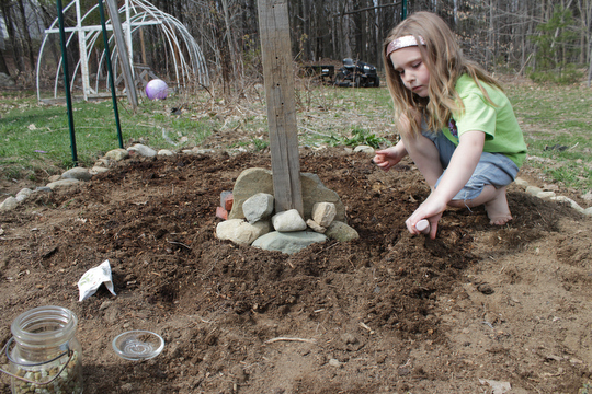 Charlotte prepares the soil to plant her peas