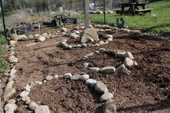 Charlotte's garden with her beds for kale, beets and peas in the background