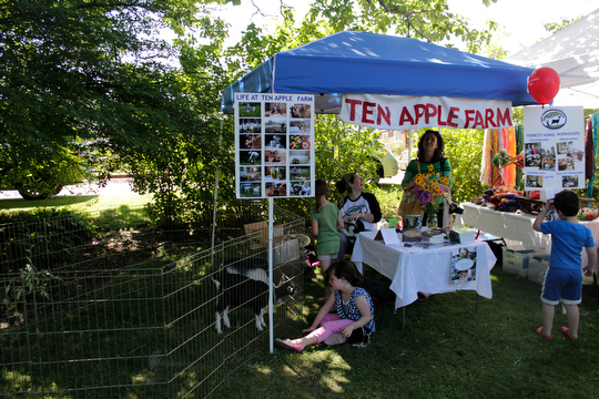 Margaret & three of our baby goats man the Ten Apple tent at the Yarmouth Clam Festival