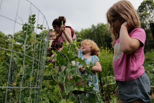 Margaret and the girls picking peas in the garden