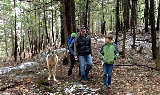 "Sping Goat Hike: photo by hiker Sonja Florman. ""That was wonderful! We learned a lot and met some really nice people too!"""