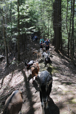 It was a picture perfect weekend for goat hiking, and we had a great crew that took advantage of the great weather.