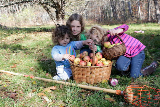 The girls and our final apple harvest for the season