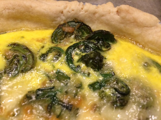Fiddlehead quiche!
