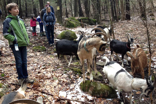This past weekend's goat hike. Photograph by Sonja Florman.