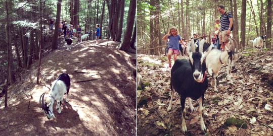 scenes from Sunday's goat hike